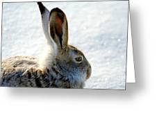Jackrabbit Greeting Card
