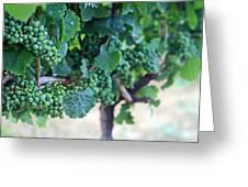 Jackson Triggs Winery 2 Greeting Card