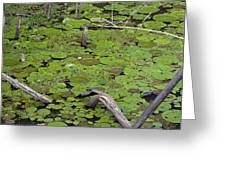 January Lake Lily Pad Greeting Card