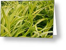 Japanese Forest Grass Greeting Card
