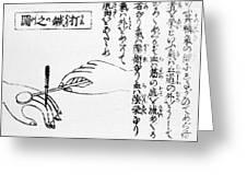 Japanese Illustration Of Moxa Greeting Card