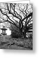Japanese Lantern And Tree - Liliuokalani Park - Hilo Hawaii Greeting Card