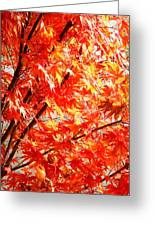 Japanese Maple Leaves 12 In The Fall Greeting Card