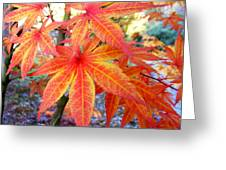 Japanese Maple Leaves 13 In The Fall Greeting Card