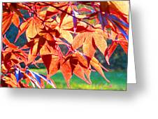 Japanese Maple Leaves 6 In The Fall Greeting Card