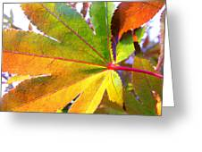 Japanese Maple Leaves 7 In The Fall Greeting Card