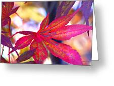 Japanese Maple Leaves In The Fall Greeting Card