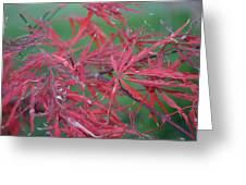 Japanese Red Leaf Maple Hybrid Greeting Card