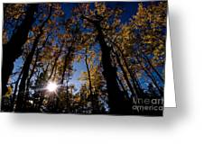 Jasper - Autumn Aspens Greeting Card