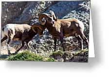 Jasper - Bighorn Sheep Greeting Card