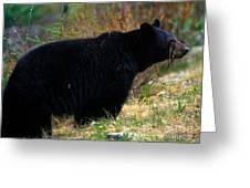Jasper - Black Bear Greeting Card
