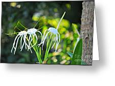 Jelly Fish Flowers Greeting Card