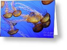 Jellyfish 6 Greeting Card
