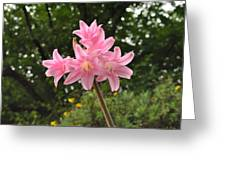 Jersey Lily Greeting Card