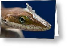 Jeweled Eye Greeting Card