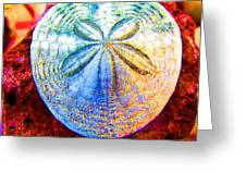 Jeweled Sand Dollar Greeting Card