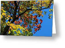 Jewels Of Autumn Greeting Card
