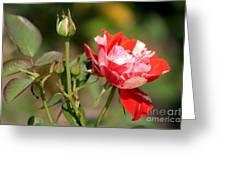 Jh Pierneef Rose Greeting Card