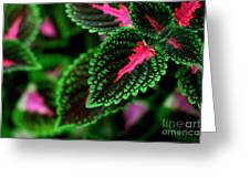 Joesphs Lace Greeting Card by Chris Hill