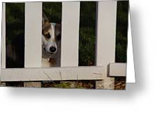 Johnny And The Picket Fence Greeting Card