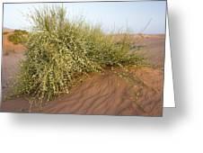 Joint-pine (ephedra Major) Greeting Card