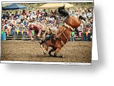 Jordan Valley Arena Action Ranch Bronc 2012 Greeting Card