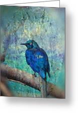 Josh's Blue Bird Greeting Card
