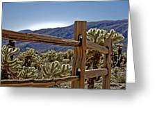 Joshua Tree Cholla Garden Greeting Card