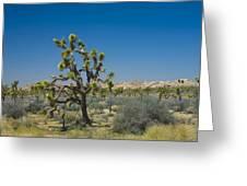 Joshua Trees Number 339 Greeting Card