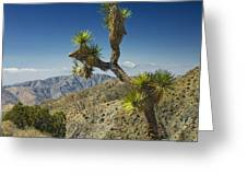 Joshua Trees Number 357 Greeting Card