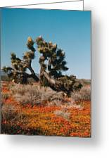 Joshuaa Tree In The Poppies Greeting Card