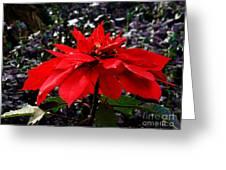 Joy And Prosperity II Greeting Card
