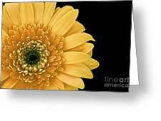 Joyful Delight Gerber Daisy Greeting Card