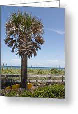 Juan Ponce De Leon Landing Site In Florida Greeting Card