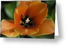 Juicy Orange Greeting Card