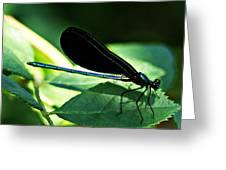 July Dragonfly II Greeting Card