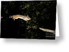 Jumping Chipmunk Greeting Card