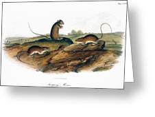 Jumping Mouse, 1846 Greeting Card