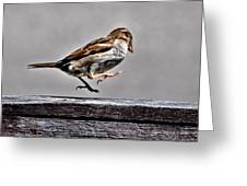 Jumping Sparrow Greeting Card