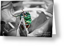 Junebug Greeting Card