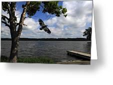 Junenile Eagle Rocky Fork Lake Greeting Card