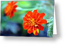 June's Bloom Greeting Card