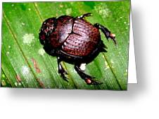 Jungle Beetle Greeting Card