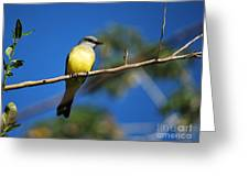 Jungle Flycatcher Greeting Card