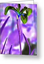 Jungle Iris Greeting Card