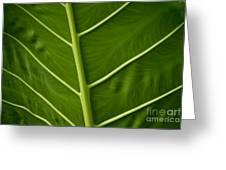 Jungle Leaf Greeting Card