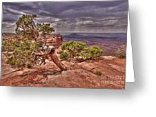 Junipers Storm Greeting Card by John Kelly
