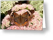Junonia Coenia Greeting Card
