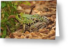 Just A Frog Greeting Card