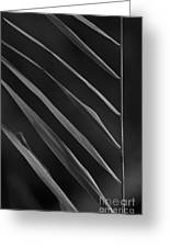 Just Grass Bw Greeting Card by Heiko Koehrer-Wagner